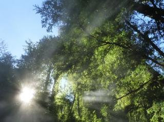 fotografia claudia vidal, diseñadora, creatividad, bosques